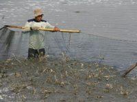 KKP Mengaku Daya Beli Pembudidaya Ikan Tumbuh Positif