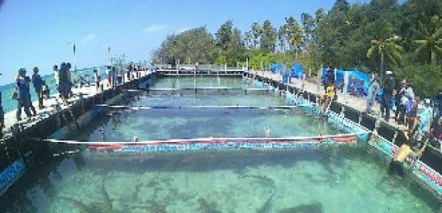 Pariwisata Karimunjawa Jateng Kian Bergairah Ditopang Pelni, Pemandu dan Paket Tour