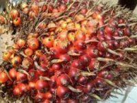 Tingkatkan Ekspor Produk Sawit, Kemendag Cabut Permendag 54