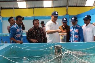 Genjot Produksi, KKP Jadikan Kabupaten Meranti Pusat Kawasan Budidaya Kakap Putih Nasional